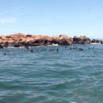 Islands of Uruguay - Isla de Lobos