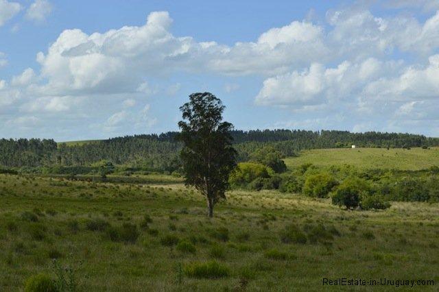 Uruguay Farm Property For Sale