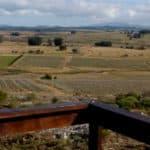Altodelaballena Winery
