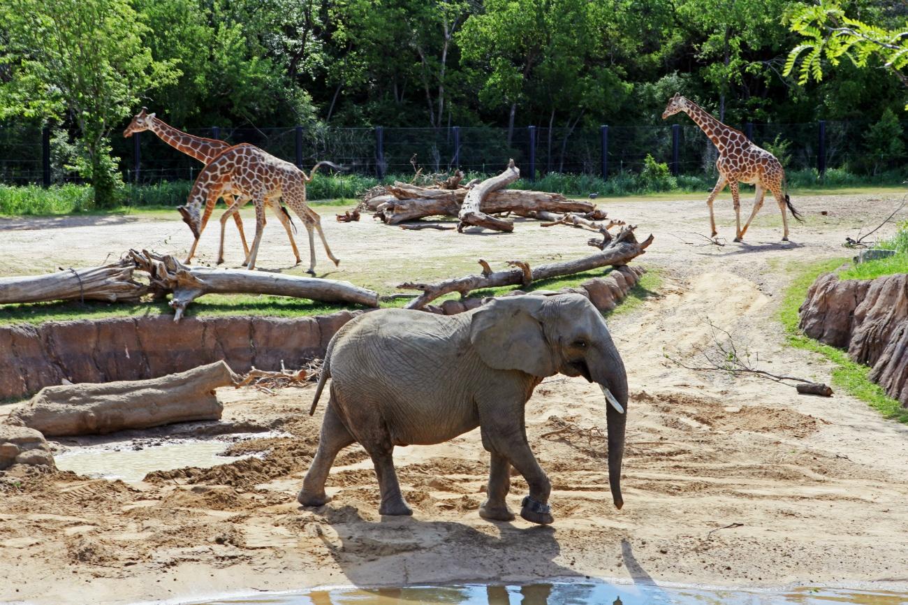 Uruguay zoos blog real estate in uruguay